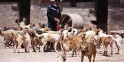 شیوه معیوب مدیریت حیوانات شهری