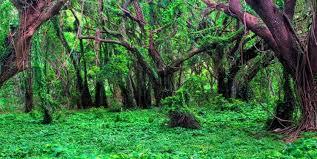 امیدها و آرزوهای جنگل های جهانی هیرکانی در گرو یک تصمیم