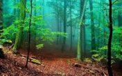 جنگلهایمان را مدیریت کنیم