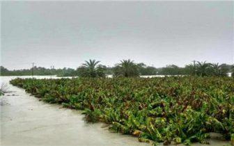 خسارت ۶۱۳ میلیارد تومانی سیلاب به بخش کشاورزی سیستان و بلوچستان