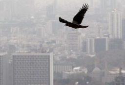 راه حل های هندی برای مقابله با آلودگی هوا