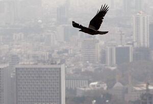جرایم رانندگی برای مقابله با آلودگی هواصرف شود