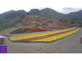 باغ لاله های لزور، روستای کندر