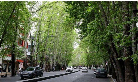 تلاش شهرداری تهران در احیا و حراست از درختان چنار خیابان ولیعصر